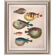 Large Antique Fish I 34W x 40H