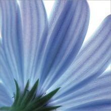Blue Floral 24W x 24H