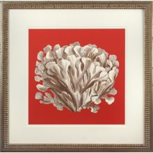 Coral on Red III 22W x 22H