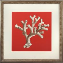 Coral on Red II 22W x 22H