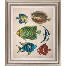 Large Antique Fish II 34W x 40H