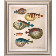 Large Antique Fish I 34W x 40H