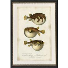 Puffer Fish 23W x 32H