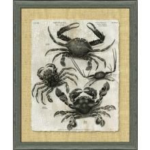 Crackled Crustacean I 34.5W x 40.5H