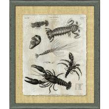 Crackled Crustacean II 34.5W x 40.5H