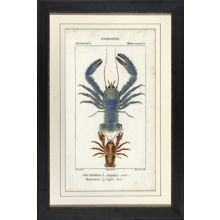 Blue Lobster 29W x 43H